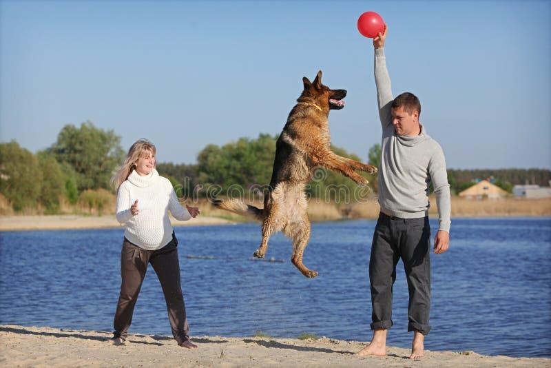 Mulher gravida e homem com cão fotografia de stock