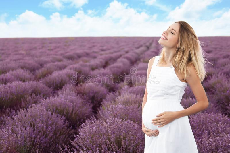 Mulher gravida no campo da alfazema foto de stock royalty free