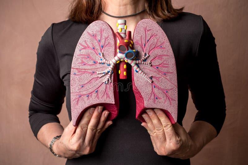 A mulher guarda o modelo médico dos pulmões humanos foto de stock