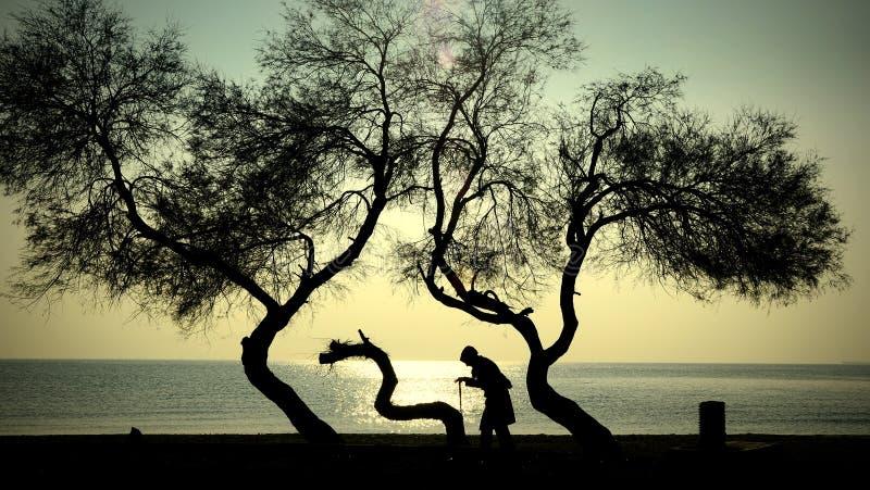Mulher idosa dos povos e das árvores que anda em um bastão imagens de stock