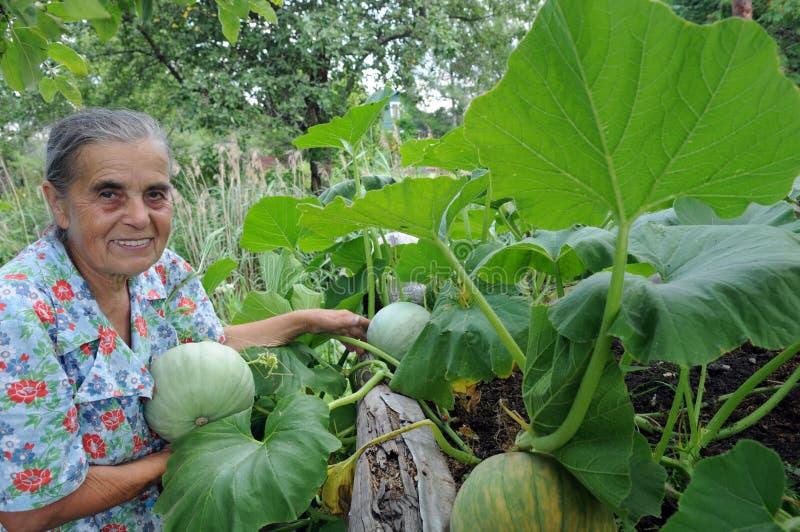Mulher idosa em uma horta. imagem de stock royalty free