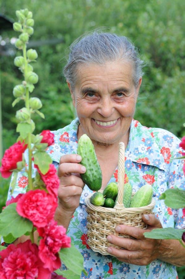 Mulher idosa em uma horta. fotos de stock royalty free