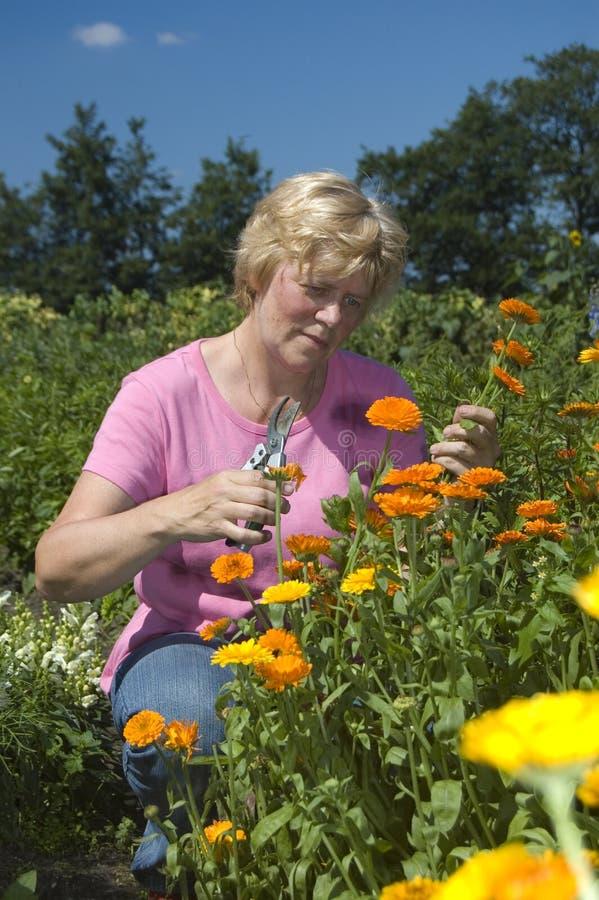 A mulher idosa está começ flores fotografia de stock royalty free
