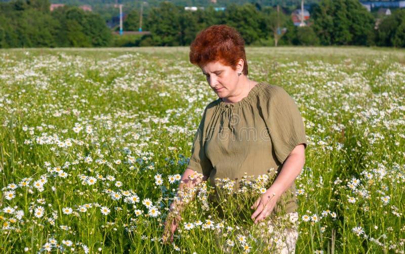 Mulher idosa no campo da camomila na vila imagem de stock royalty free