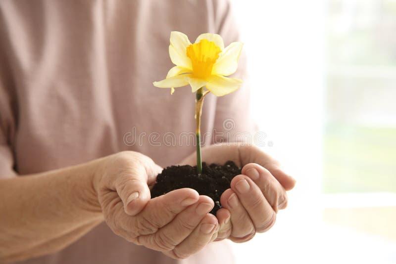 Mulher idosa que guarda a flor fotografia de stock royalty free