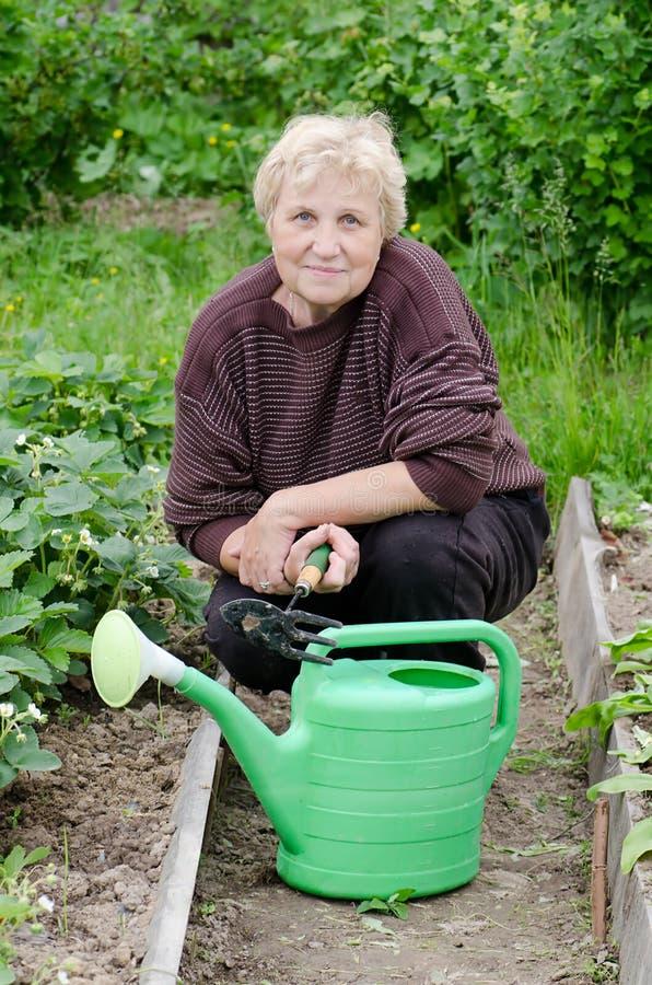 A mulher idosa trabalha em uma horta fotos de stock royalty free