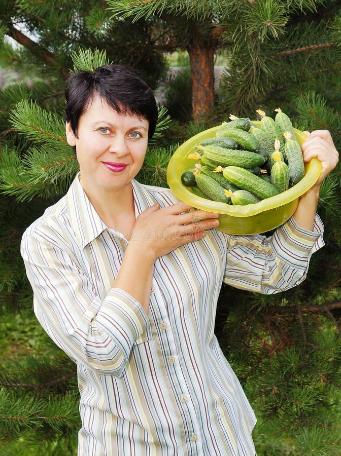 Mulher-jardineiro com pepinos frescos foto de stock royalty free