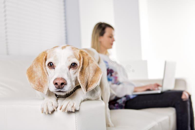 Mulher loura nova bonita com seu cão em casa fotos de stock royalty free