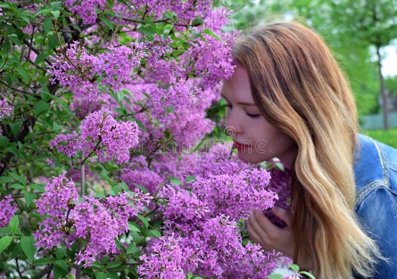 Mulher loura nova pelo arbusto do lilás fotos de stock royalty free