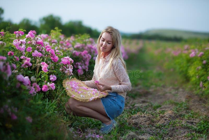 Mulher macia nova bonita que anda no campo das rosas de chá As calças de brim vestindo da senhora loura e o chapéu retro apreciam foto de stock royalty free
