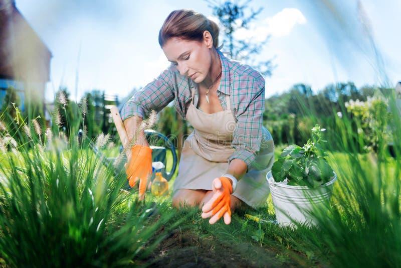 Mulher madura atraente que veste as luvas alaranjadas que puxam as ervas daninhas no jardim imagem de stock royalty free
