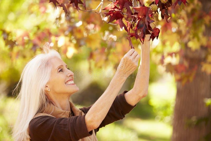Mulher madura que relaxa em Autumn Landscape imagens de stock