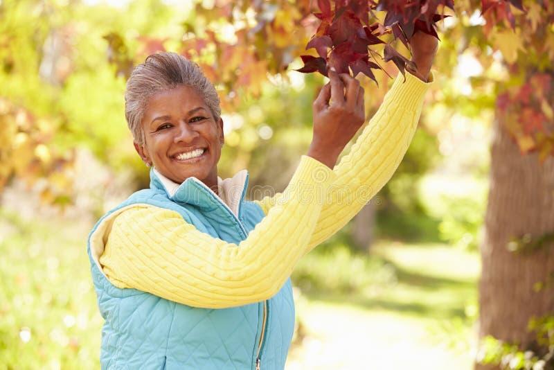 Mulher madura que relaxa em Autumn Landscape fotos de stock royalty free