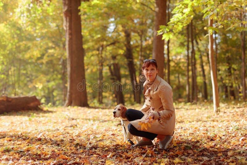 Mulher meados de da idade com o lebreiro que anda no parque do outono foto de stock royalty free