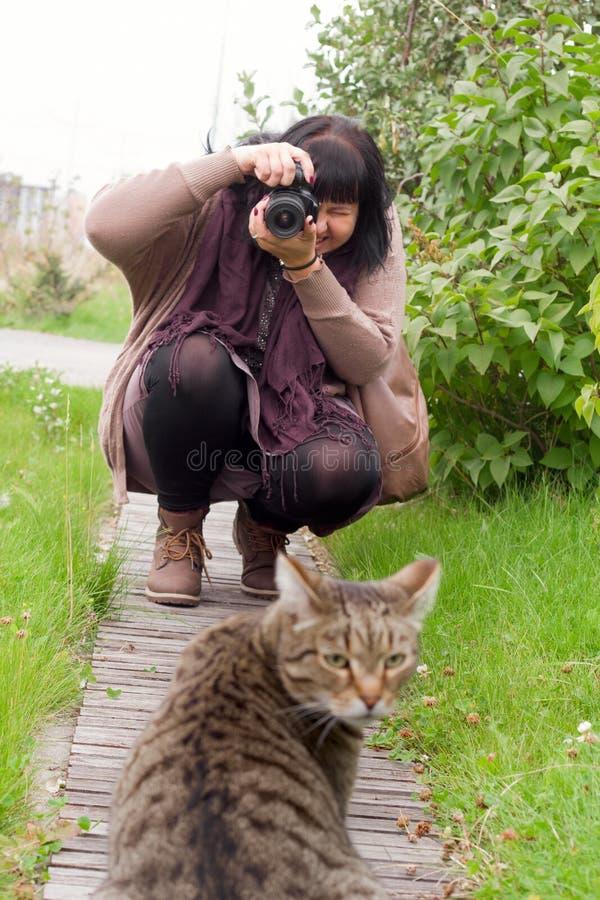 Mulher moreno nova com câmera, mulher que toma a foto do gato listrado cinzento foto de stock