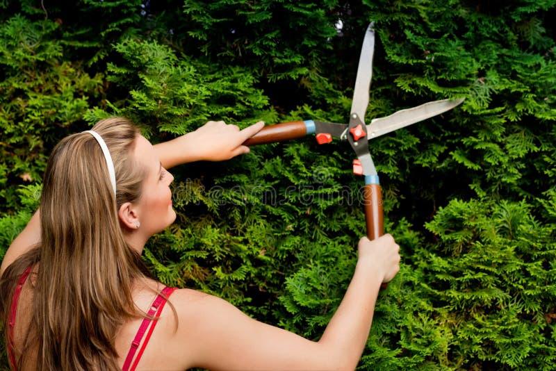 Mulher na conversão do aparamento do jardim imagem de stock