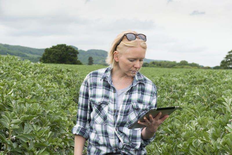 Mulher na plantação exterior que olha sua tela da tabuleta imagens de stock