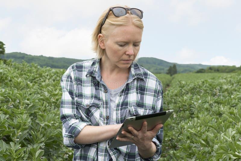 Mulher na plantação exterior que olha a tela do dispositivo móvel imagem de stock royalty free