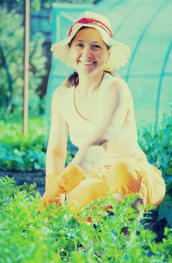 Mulher na planta da cenoura fotografia de stock