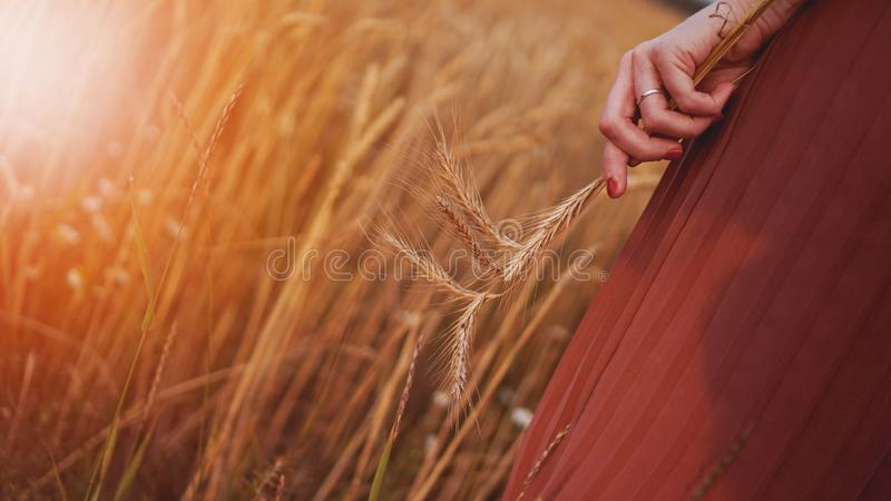 A mulher no campo de trigo, mulher guarda a orelha do trigo à disposição foto de stock