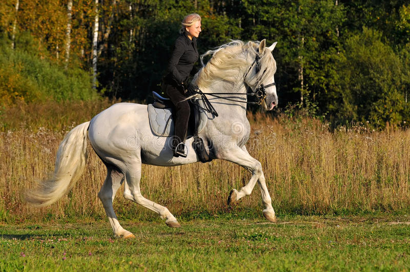 Mulher no cavalo branco fotografia de stock royalty free