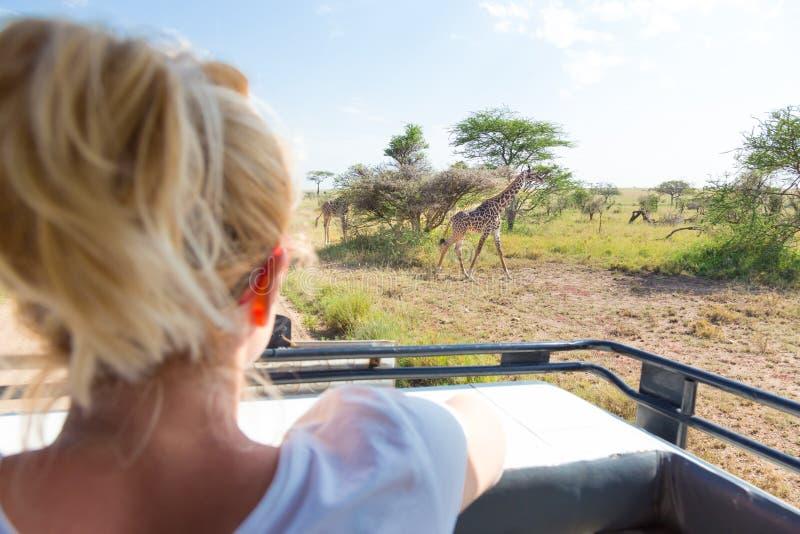 Mulher no safari africano dos animais selvagens observando o girafa pastar no savana do jipe aberto do safari do telhado fotografia de stock royalty free