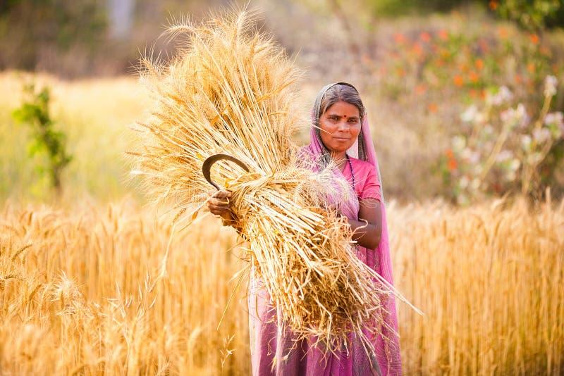 Mulher no trigo da colheita da Índia imagem de stock