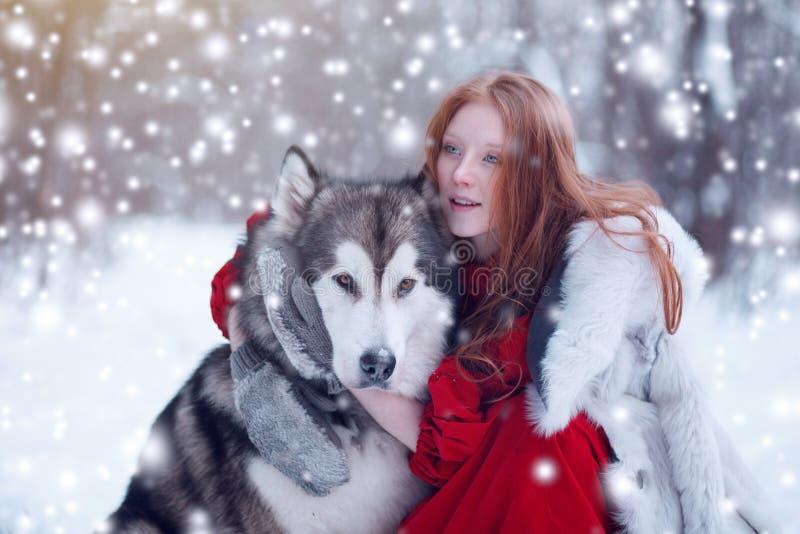 Mulher no vestido vermelho com cães Menina do conto de fadas com cães de puxar trenós ou Malamute Natal fotos de stock royalty free