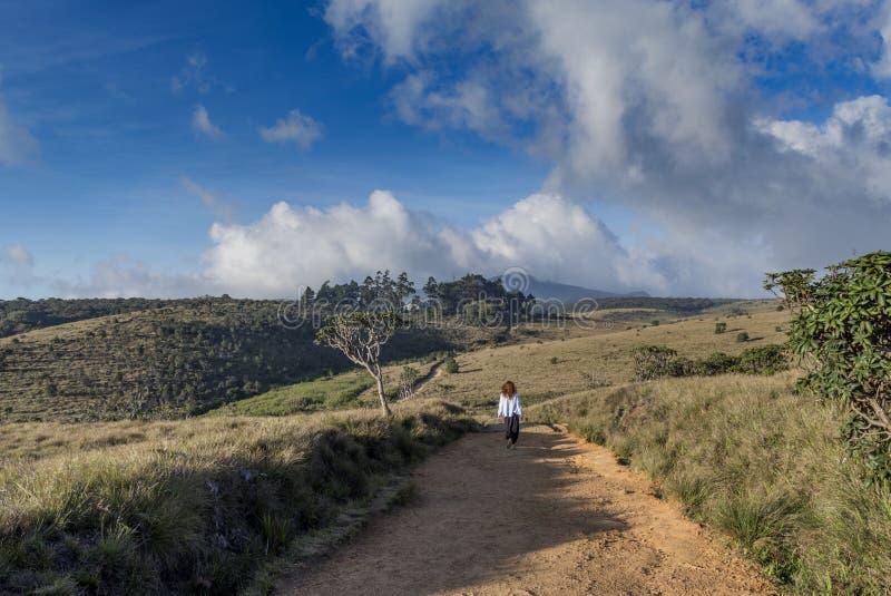 Mulher nova do turista que anda pela fuga no parque nacional imagens de stock royalty free