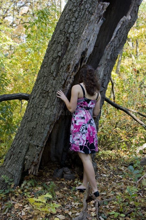 Mulher nova e árvore oca imagem de stock royalty free