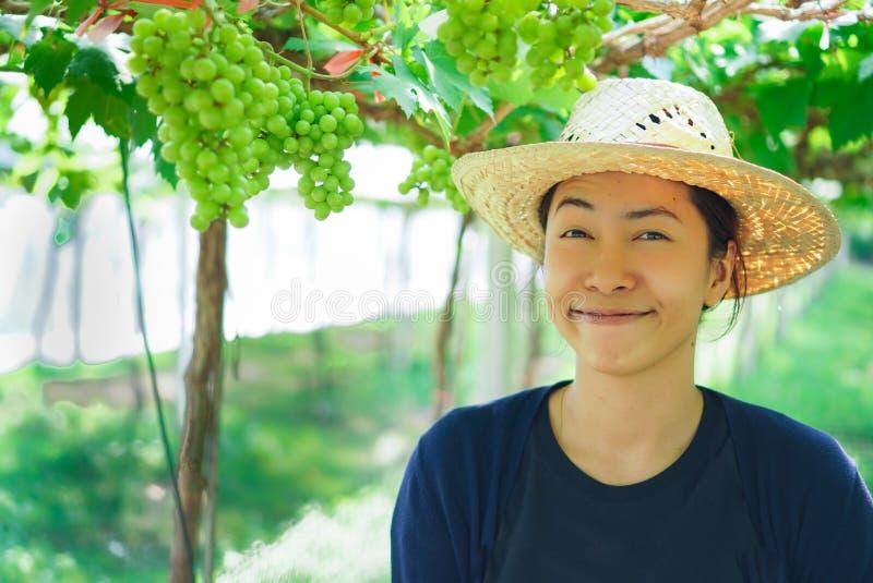 Mulher oriental nova bonita que colhe uvas pretas fora no vinhedo foto de stock royalty free