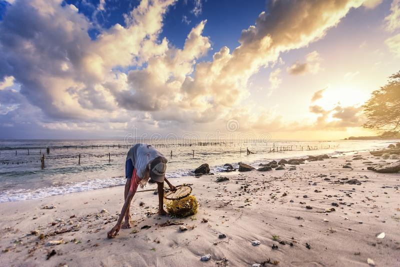 A mulher pobre idosa pegara a alga ao longo da praia fotografia de stock royalty free