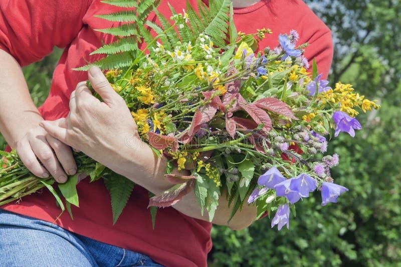 A mulher prende o ramalhete de flores selvagens imagem de stock royalty free