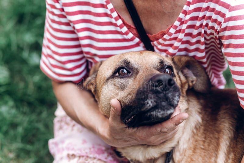 A mulher que abraça o cão, os olhos grandes bonitos persegue o retrato, fim da cara do cachorrinho fotografia de stock