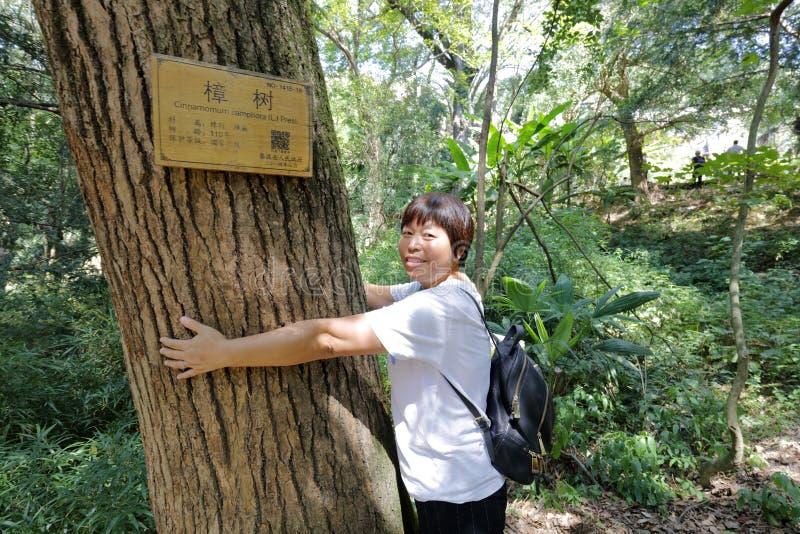 Mulher que adere-se à árvore de cânfora velha, adôbe rgb fotografia de stock