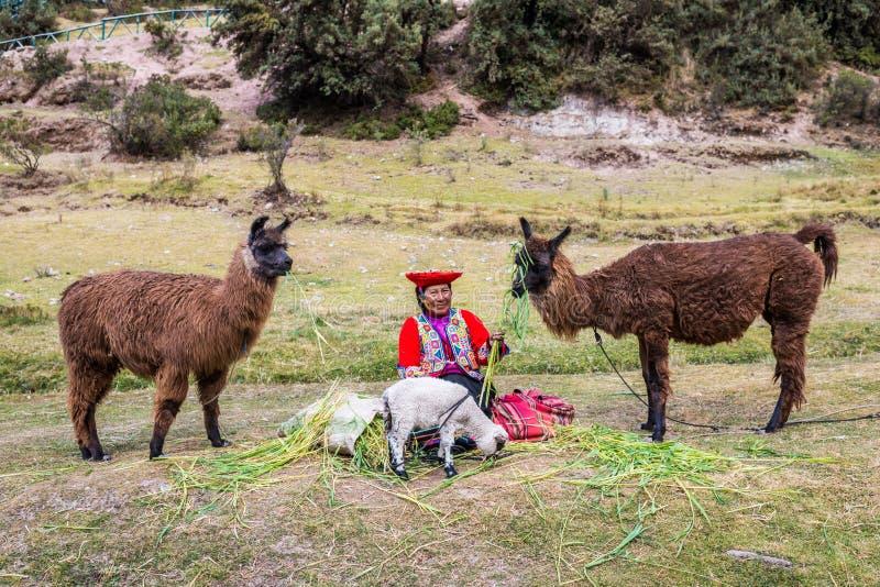 A mulher que alimenta alpacas Tambomachay arruina Andes peruanos em Cuzco imagens de stock royalty free