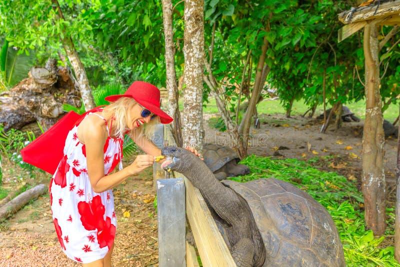 Mulher que alimenta a tartaruga gigante imagem de stock