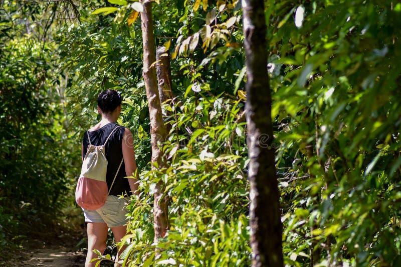 Mulher que anda ao longo de um trajeto através da selva fotografia de stock