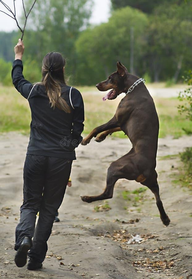 Mulher que anda com cão imagens de stock