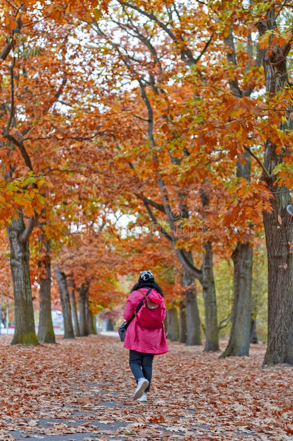 Mulher que anda entre árvores vermelhas e amarelas coloridas da folha no jardim durante o outono em Wilhelm Kulz Park em Leipzig, fotografia de stock royalty free