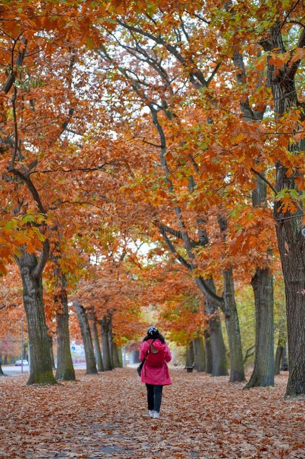 Mulher que anda entre ?rvores vermelhas e amarelas coloridas da folha no jardim durante o outono em Wilhelm Kulz Park em Leipzig, imagem de stock royalty free