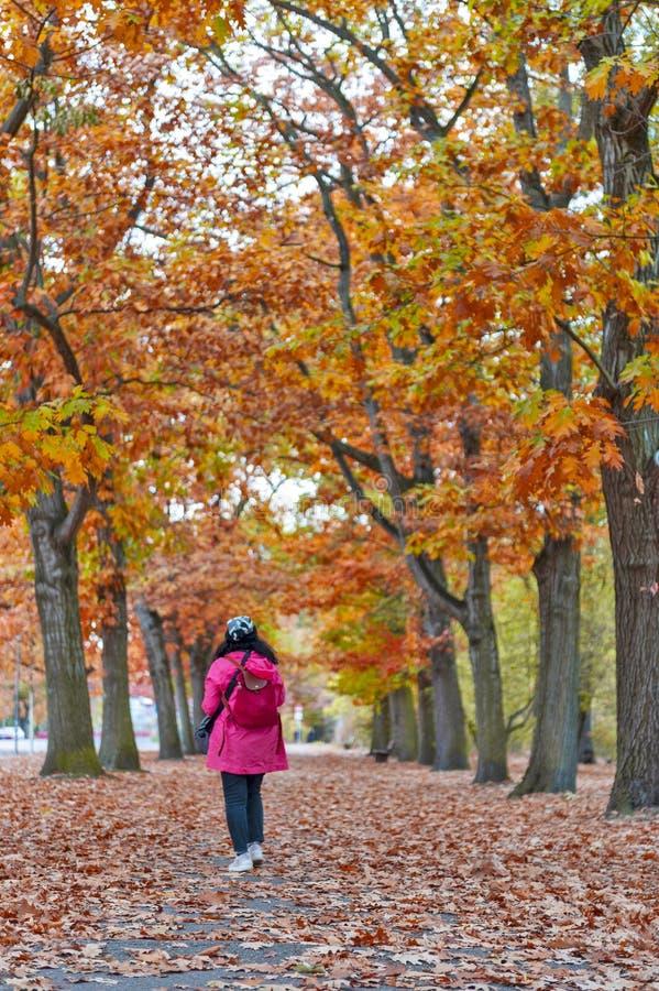 Mulher que anda entre ?rvores vermelhas e amarelas coloridas da folha no jardim durante o outono em Wilhelm Kulz Park em Leipzig, foto de stock