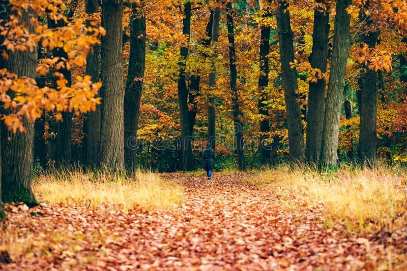 Mulher que anda no trajeto na floresta do outono fotografia de stock