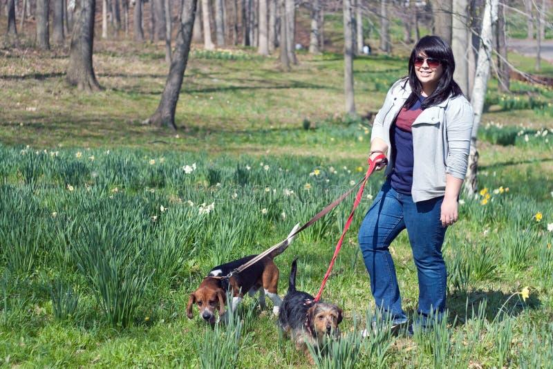 Mulher que anda seus cães fotografia de stock