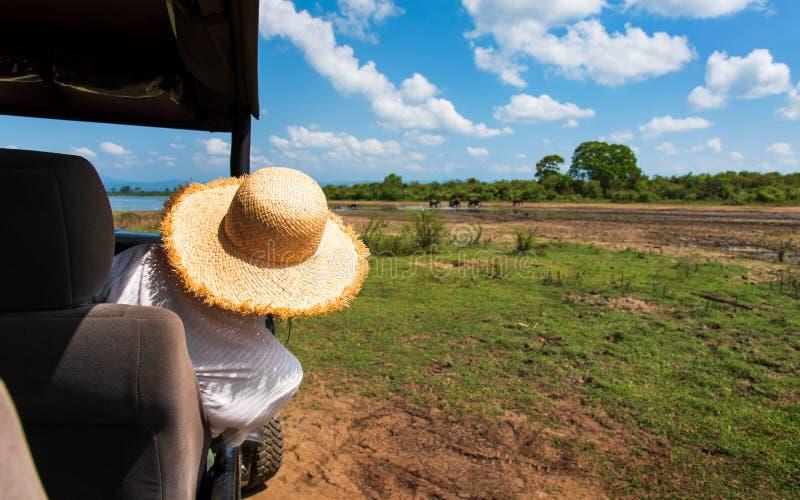 Mulher que aprecia a vista do caminhão do safari fotos de stock royalty free