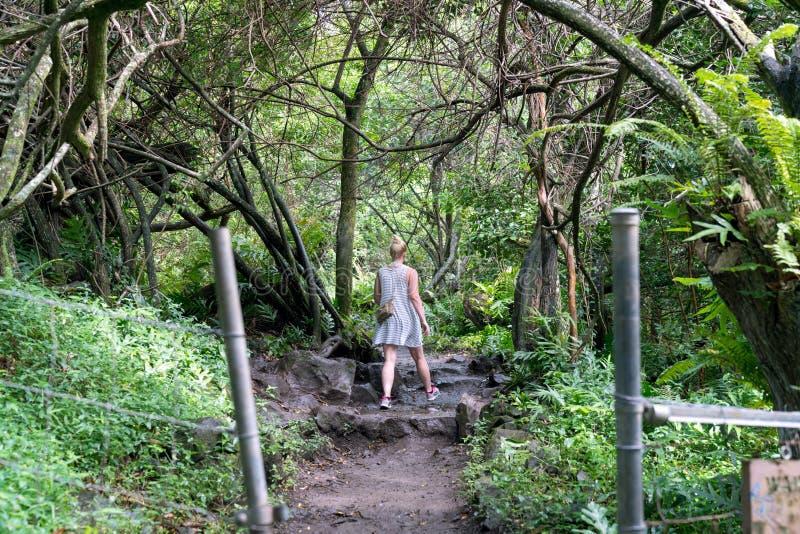 Mulher que caminha em Forest Trail Haleakala National Park tropical em Maui, Havaí imagens de stock royalty free
