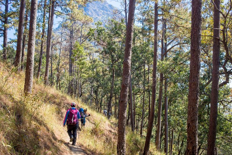 Mulher que caminha na floresta com mochileiro foto de stock royalty free