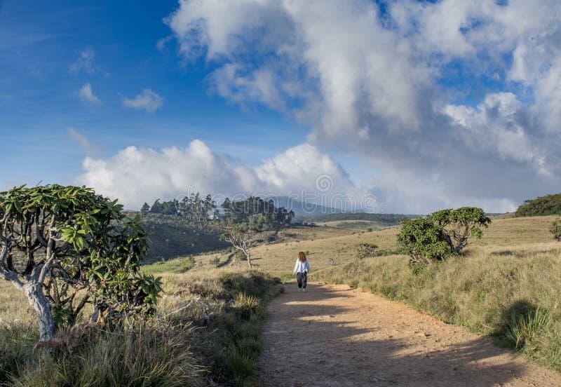 Mulher que caminha no parque nacional imagens de stock royalty free