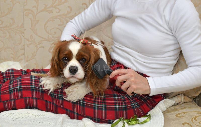 Mulher que escova seu cão fotografia de stock