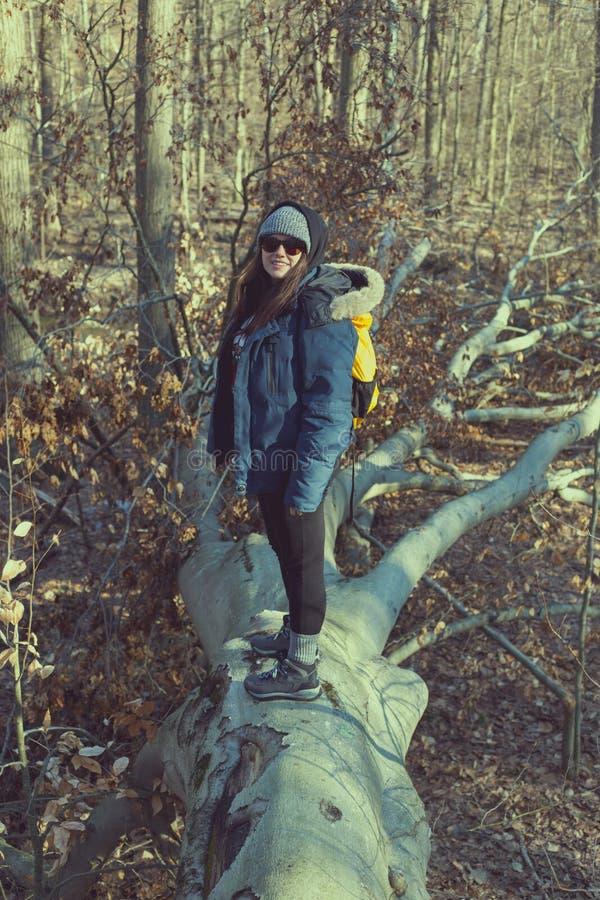 Mulher que está na árvore caída nas madeiras fotografia de stock royalty free